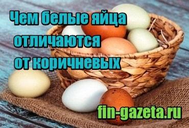 картинка Чем белые яйца отличаются от коричневых